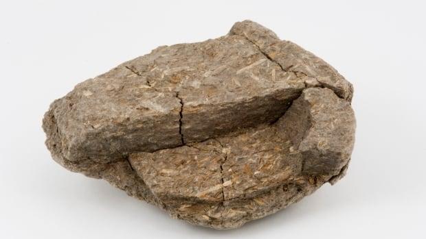 Mastodon dung reveals diet, environment in Nova Scotia some 75,000 years ago