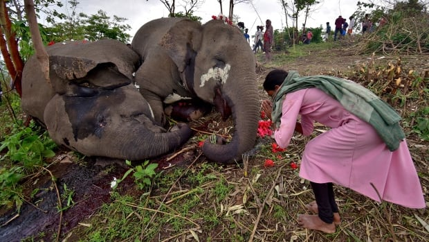 Lightning suspected in deaths of 18 elephants found in Indian forest reserve