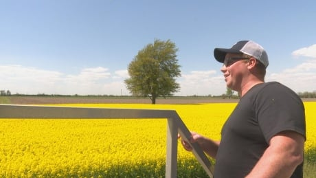 <div>'A big field of gold': With rising prices, canola a prime opportunity for Ontario farmers</div>