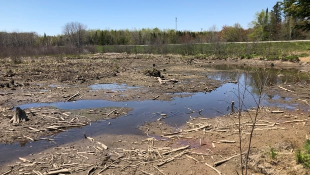 Highway maintenance leads to water being drained from Fredericton wetlands | CBC News