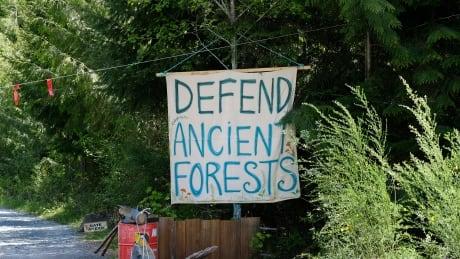 Tree Poaching 20210516