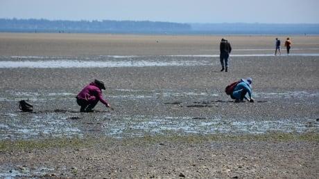 People harvesting clams