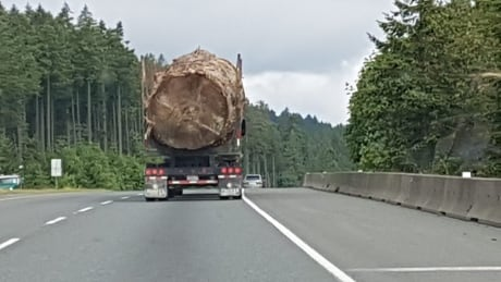 Tree on truck that Lorna Beecroft snapped