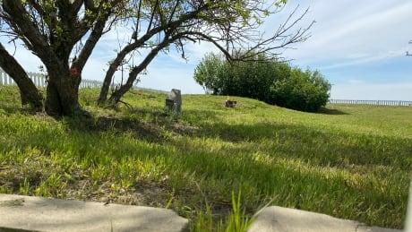 Grave marker at Regina Indian Industrial School Cemetery