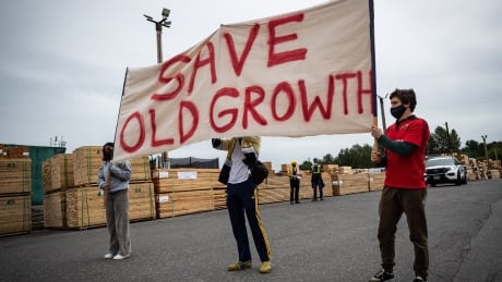 Old Growth Logging 20210530