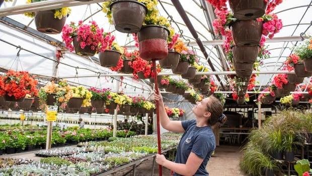 P.E.I.'s 5 hottest garden trends for a 2nd COVID-19 season
