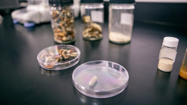 B.C. health researchers harness the 'magic' of psychedelic mushrooms | CBC News