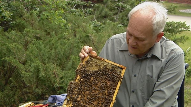 More honeybees won't save wild ones, say Calgary beekeepers   CBC News