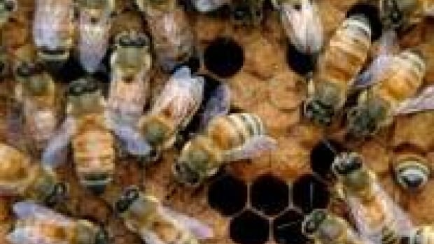 About 58 per cent of Ontario bees died this winter.
