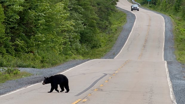Elliot Lake man helps rescue teenage cyclist from the grip of a black bear