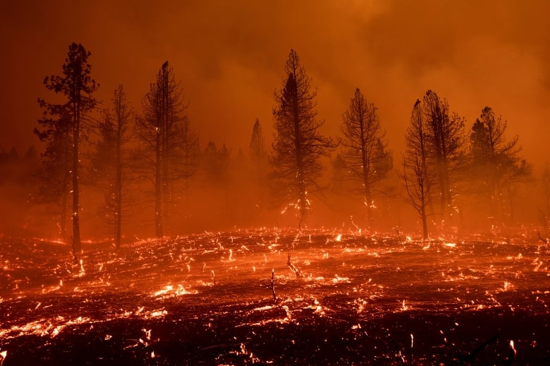 Firefighters battle California fires in conditions so harsh some water  evaporates before it hits the ground | CBC News
