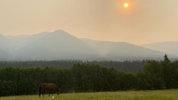 B.C. livestock owners scramble to move cattle, horses caught in wildfire risk