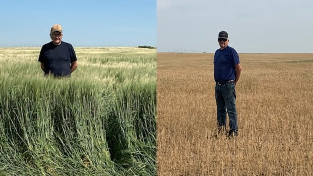 This year's drought is a 'creeping disaster' that affects more than just farmers