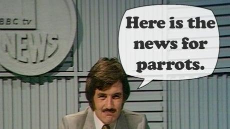 News for parrots