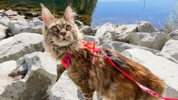 These adventure cats bring joy to their owners — and social media followers | CBC News