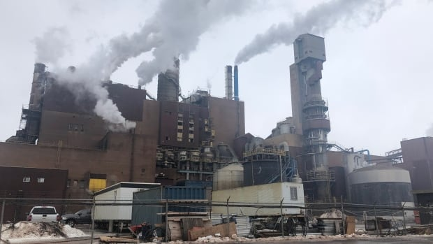 Liberal, NDP, Tory leaders all oppose government funding for Northern Pulp   CBC News