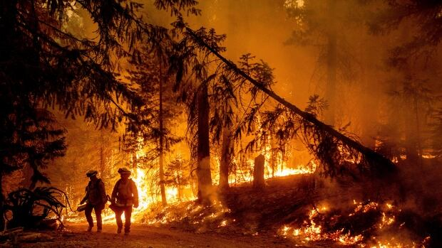 Wildfires blasting through western U.S. draw states to lend support | CBC News