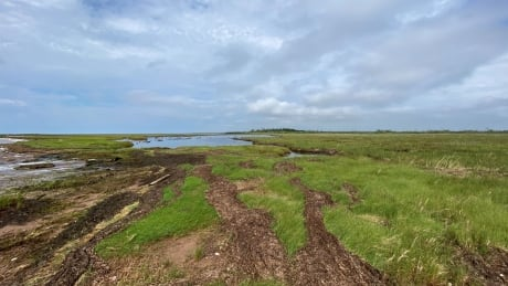 Mossy Point, Percival River, PEI