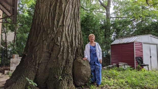Toronto agreed to buy a home to save a 250-year-old tree. Now, the seller wants a higher price | CBC News