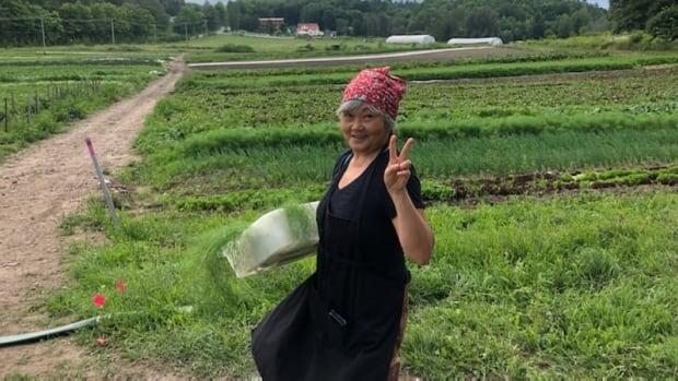 Make your own veggie top pesto | CBC News
