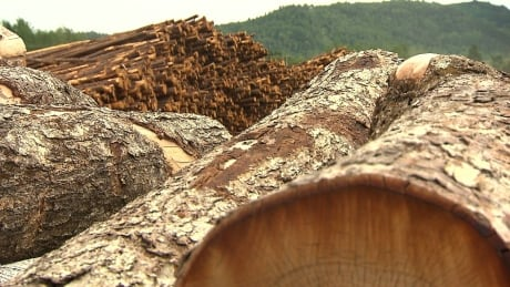 Forestry industry in Quebec