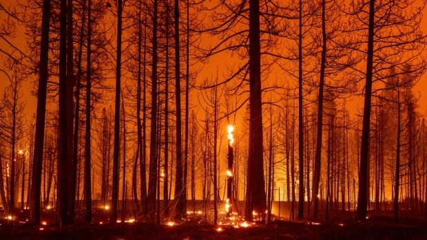 Hot, gusty weather could mean explosive growth of California's largest wildfire | CBC News