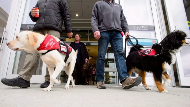 Conservatives call for national standards on service dogs for veterans with PTSD