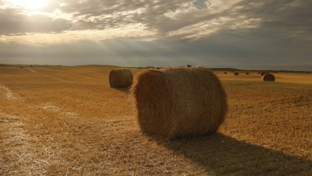Maritime farmers doing 'what we can' to get surplus hay shipped to drought-stricken Prairies