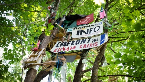 Anti-pipeline activists mark one year of treetop occupation in Burnaby