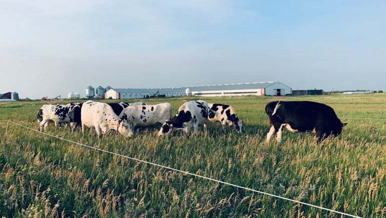 , Prairie farmers consider new techniques as drought threatens to become the 'new normal' | CBC News,