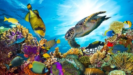 Coral reef sea turtle