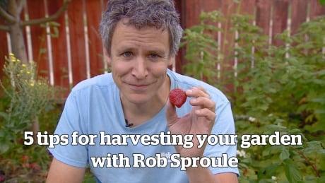 5 tips for harvesting your garden