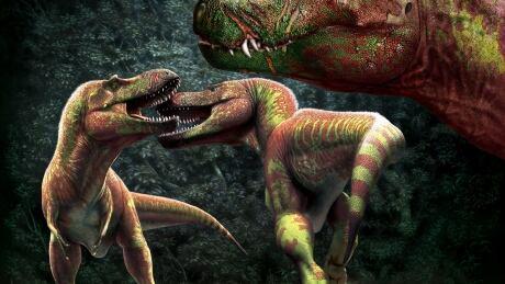 T-rex fighting