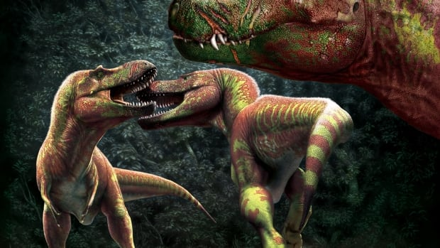 Bite me: New study of dinosaur scars sheds light on prehistoric, in-your-face battles for dominance