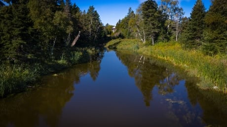 Wright's Creek 2