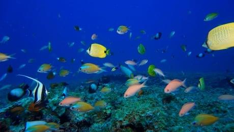 Hawaii Destructive Seaweed
