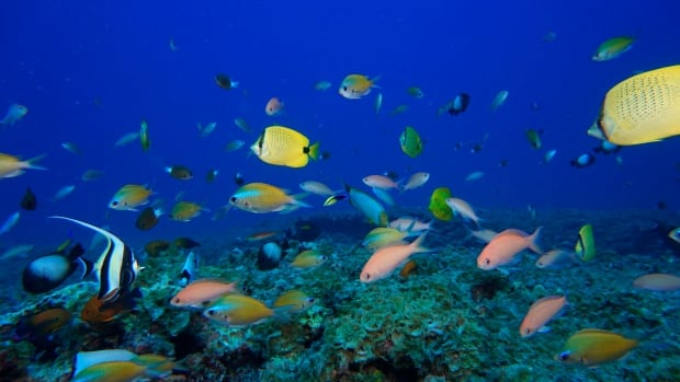 The ocean has lost half its coral reef coverage, study finds