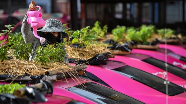 Green-thumbed Thai cabbies turn taxis into gardens amid COVID-19 crunch