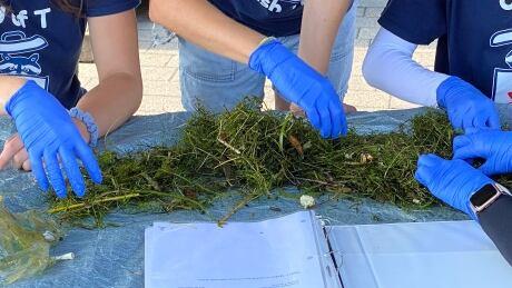 Seabin waste