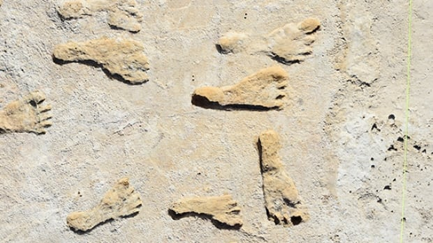Fossilized footprints discovered in New Mexico indicate that early humans were walking across North America around 23,000 years ago, researchers repor