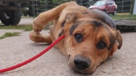 Hillside Rescue dog