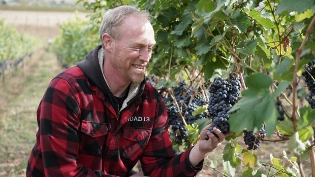B.C. winemakers in good spirits about 2021 vintage despite summer of fire and extreme heat