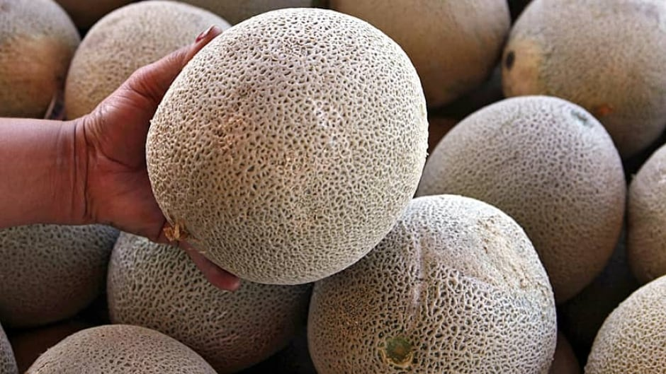 Del Monte Sysco Imperial Fresh Cantaloupe Recalled Over Salmonella Concerns Cbc News Are warning consumers not to eat cantaloupes sold unwrapped from a food basics supermarket located at 2452. cbc ca