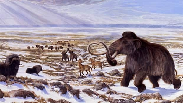 Woolly mammoths roamed both North America and Asia for hundreds of thousands of years. Many went extinct during the most recent period of global warming.