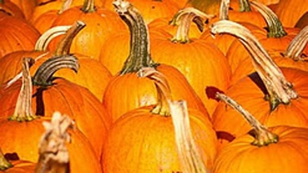 You could pick up a pumpkin at the Annapolis Valley Pumpkin Fest this weekend. (CBC)